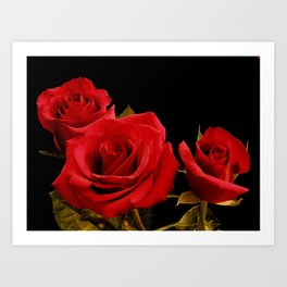 Red Roses in a cluster Art Print