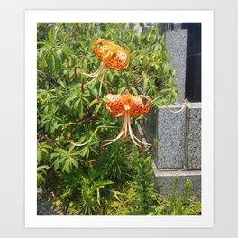 Tiger Lilies Art Print