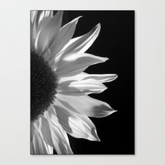 Sunflower by Torchlight Canvas Print