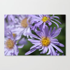 Daises Everywhere Canvas Print
