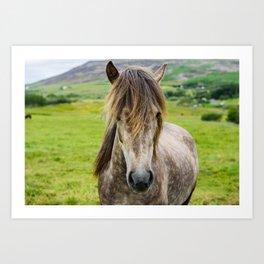 Beautiful, grey Icelandic horse portrait at meadow. Art Print