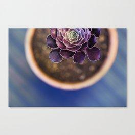 Patterns Canvas Print