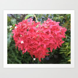 Red Ixora Heart Art Print