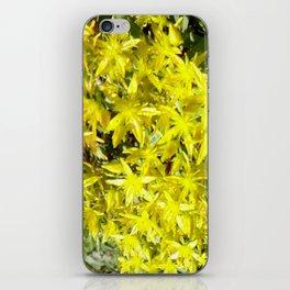 BLOOMING YELLOW SEDUM SPRING FLOWERS GARDEN ART iPhone Skin