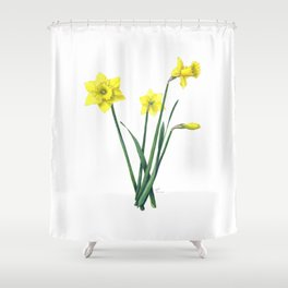 Yellow Daffodils Botanical Illustration Shower Curtain