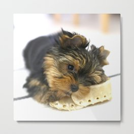 Puppy And the First Chewing Bone Yorkshireterrier #decor #society6 Metal Print