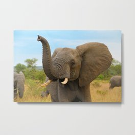 South African Elephant Metal Print