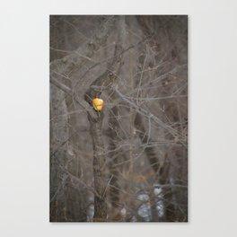 Winter Food Source Canvas Print