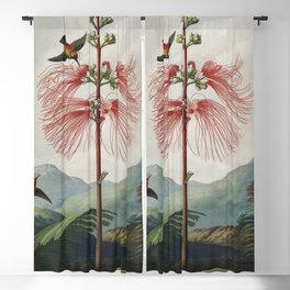 Flowering Sensitive Plant from The Temple of Flora (1807) by Robert John Thornton. Blackout Curtain