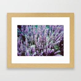flower photography by Božo Radić Framed Art Print