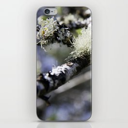 A tuft of moss on a Birch tree iPhone Skin