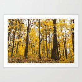 Fall Has Arrived Art Print