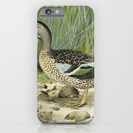 Blue-Winged Teal (Anas Discors Linn) illustrated by JL Ridgway (1859-1947) and WB Gillette (1864-193 iPhone Case