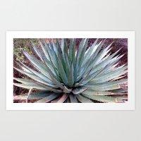 Grand Canyon plant Art Print