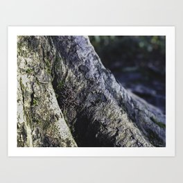 Tree Trunk Mushrooms - Nature Photography Art Print