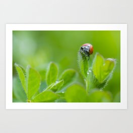 The Ladybug Art Print