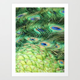Feather Me Blue & Green (Peacock Feathers) Art Print