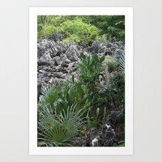 Cayman Catus Art Print