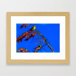 Arizona Goldfinches Framed Art Print