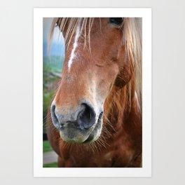 Close-up of a horse Art Print