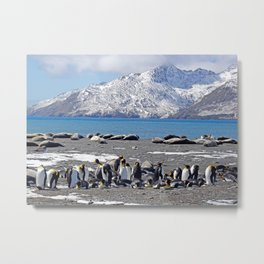 King Penguins and Fur Seals Metal Print