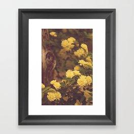 Lady Banks Framed Art Print