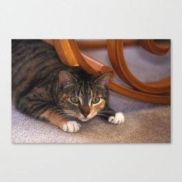 Careful Cat Canvas Print