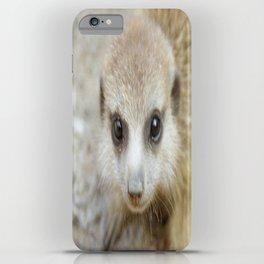 Baby Meerkat iPhone Case