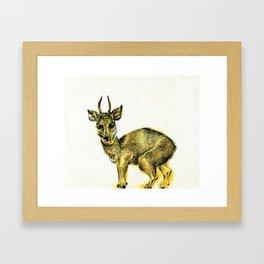 Klipspringer Framed Art Print