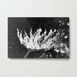 Bowl with light Metal Print