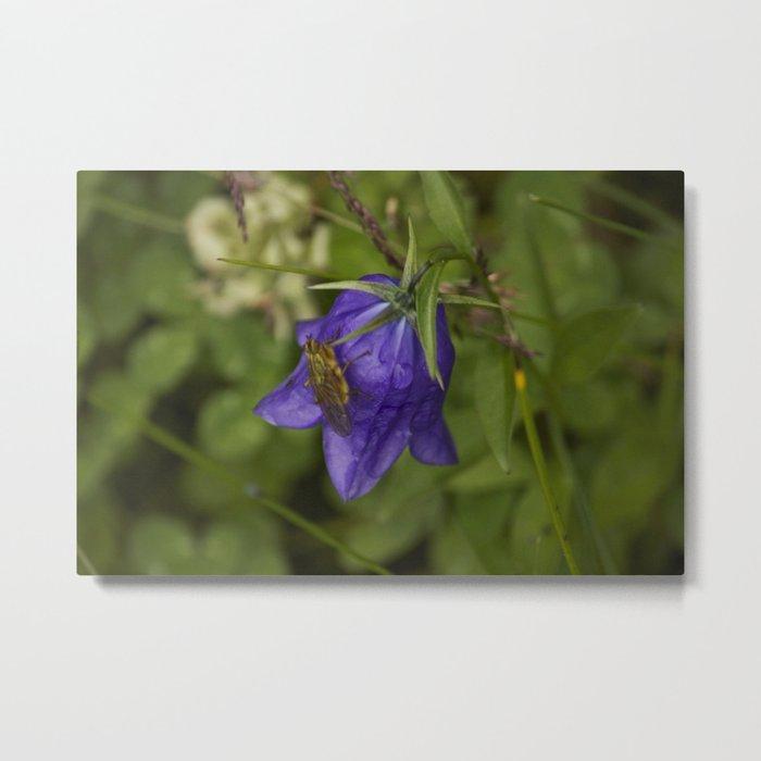 Bluebell Photography Print Metal Print