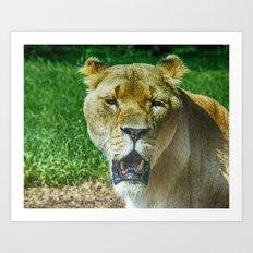 A Lioness Portrait Art Print