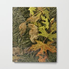 Fallen Autumn Leaves on the Shore of Hall Lake Metal Print