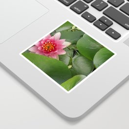 Lotus Flowe_pink1 Sticker
