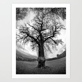 Gnarled old Tree Art Print