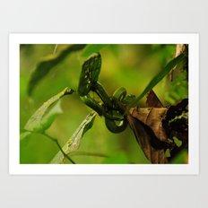 Green Snake in the Trees Art Print