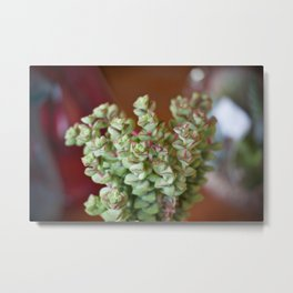 Fat Plants Thorns Cactus Metal Print