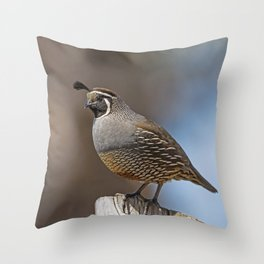 Male California Quail (Callipepla Californica) stands on a fence post near Point Reyes California. Throw Pillow