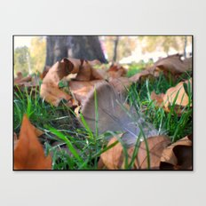 Feather in th Park Canvas Print