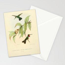 mellisuga minima, son nid, doricha evelynae Stationery Cards