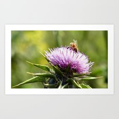 Bee in the right place (at the right time) Art Print