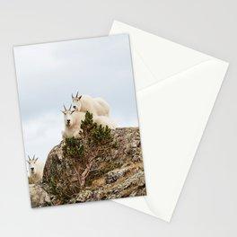 Three Ami-Goats // Scenic Hike Animals Photograph Colorado Wildlife National Park Mountain Goats Stationery Cards