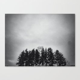 Trees in morning mist Canvas Print