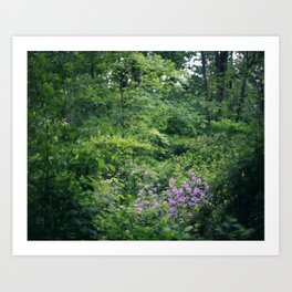 Purple Flowers Growing in the Forest Art Print