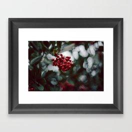 Berries of some kind Framed Art Print