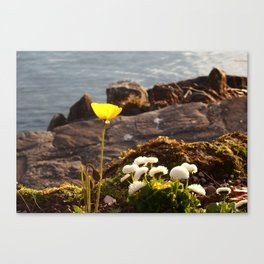 Lakeside Flowers II Canvas Print