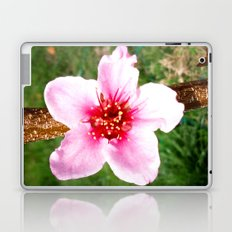 Peach Blossom Laptop & iPad Skin