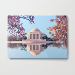 Cherry Blossoms at Jefferson Memorial in Washington DC Metal Print