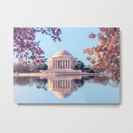 Cherry Blossoms at Jefferson Memorial in Washington DC Metal Print