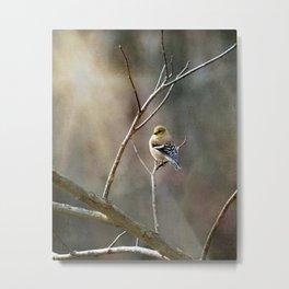 Morning Goldfinch Metal Print